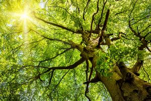 Europ-Labo: fabricant d'écoproduits biologiques et naturels